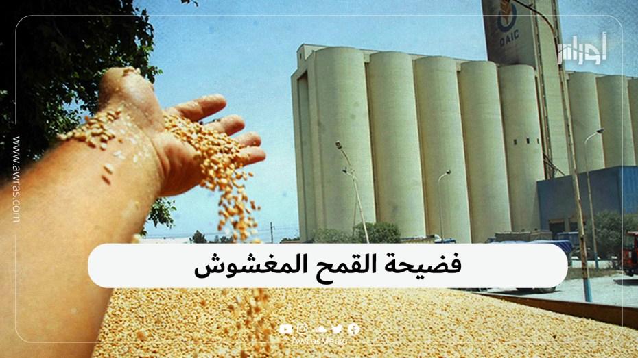 فضيحة القمح المغشوش