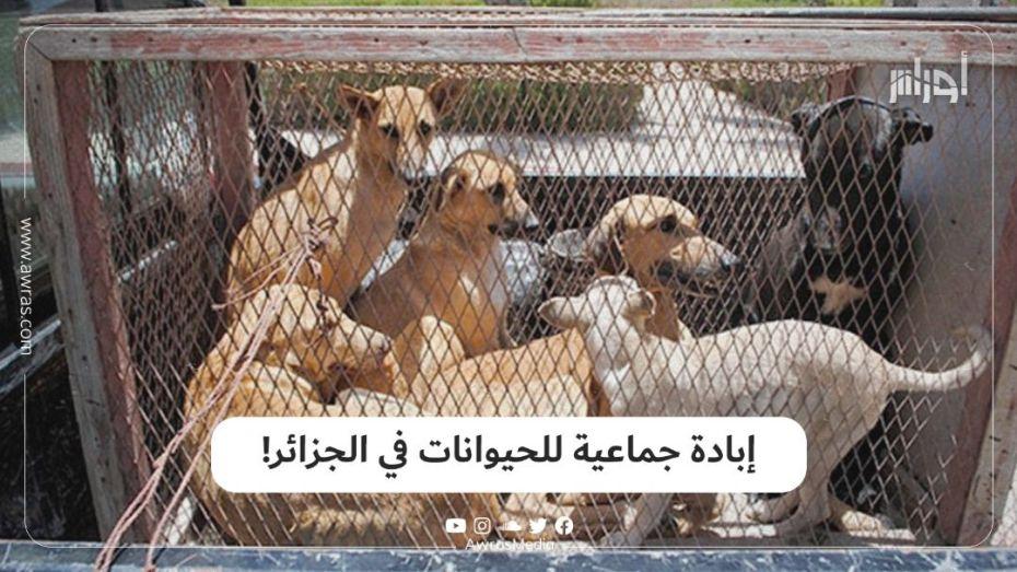 إبادة جماعية للحيوانات في الجزائر!