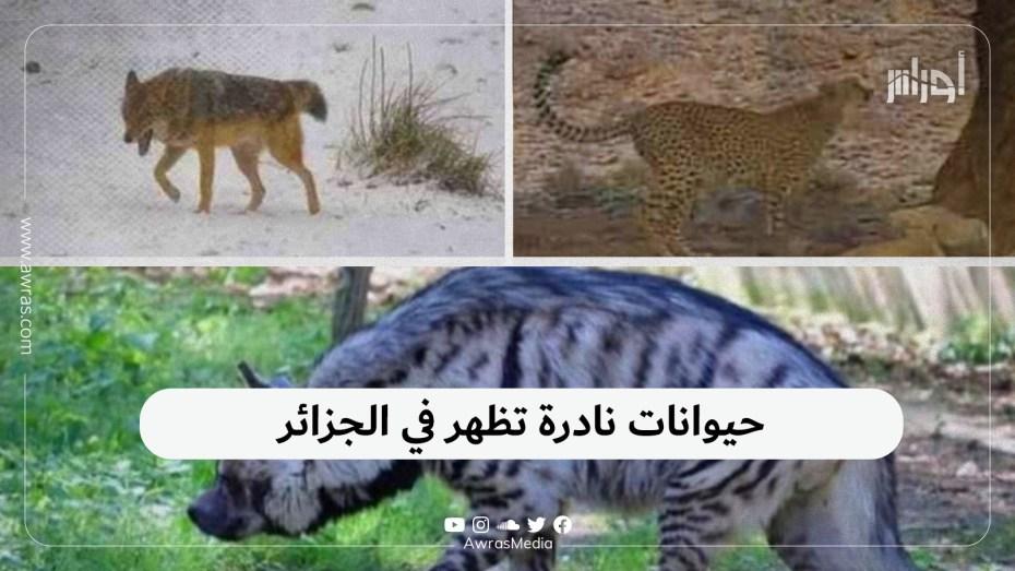 حيوانات نادرة تظهر في الجزائر