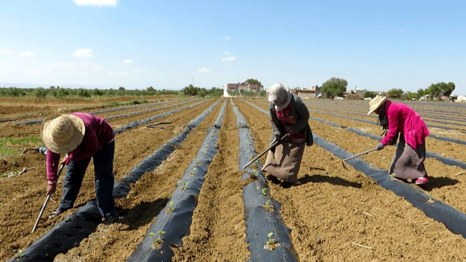 وزير الفلاحة يشيد بدور المرأة في القطاع