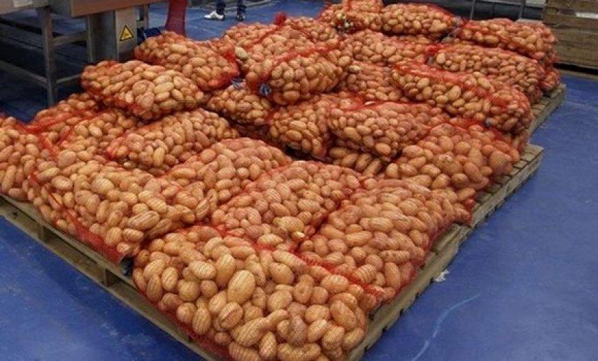 ضخ كميات من البطاطا