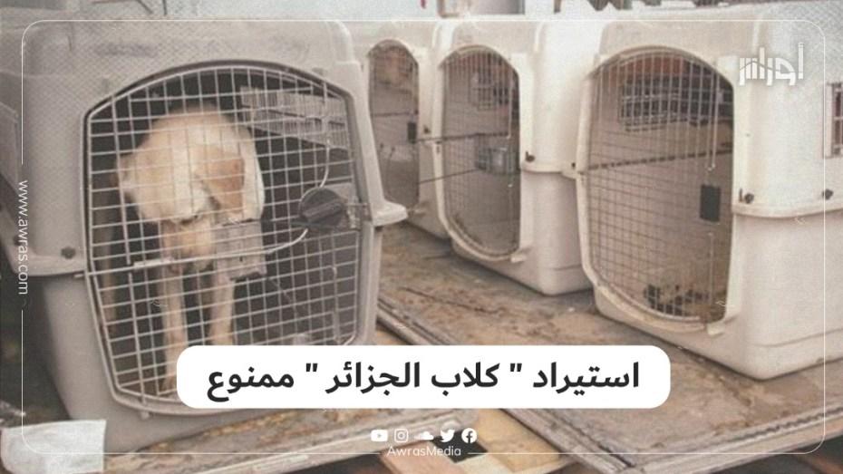 """استيراد """"كلاب الجزائر"""" ممنوع"""