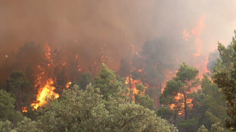 إلى أين وصلت الحرائق؟.. الحماية المدنية تجيب وتكشف حصيلة الحرائق