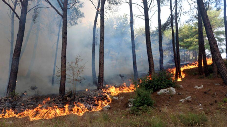 وزير الفلاحة يكشف مساحة الحرائق الإجمالية بالوطن