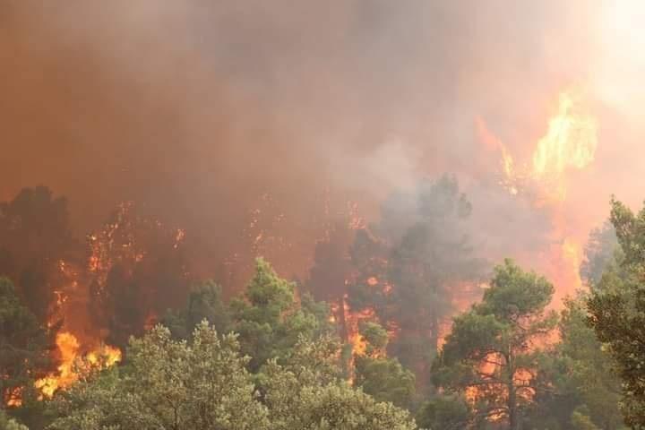 وزارة الفلاحة: تجنيد كل الإمكانيات والوسائل لإخماد حرائق خنشلة
