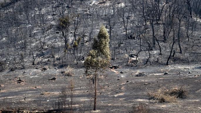 الاتحاد الأوروبي يتبرع ماليا لضحايا الحرائق في الجزائر