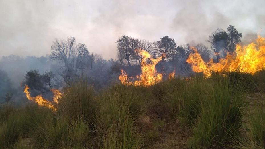 اندلاع 18 حريق بولاية جيجل