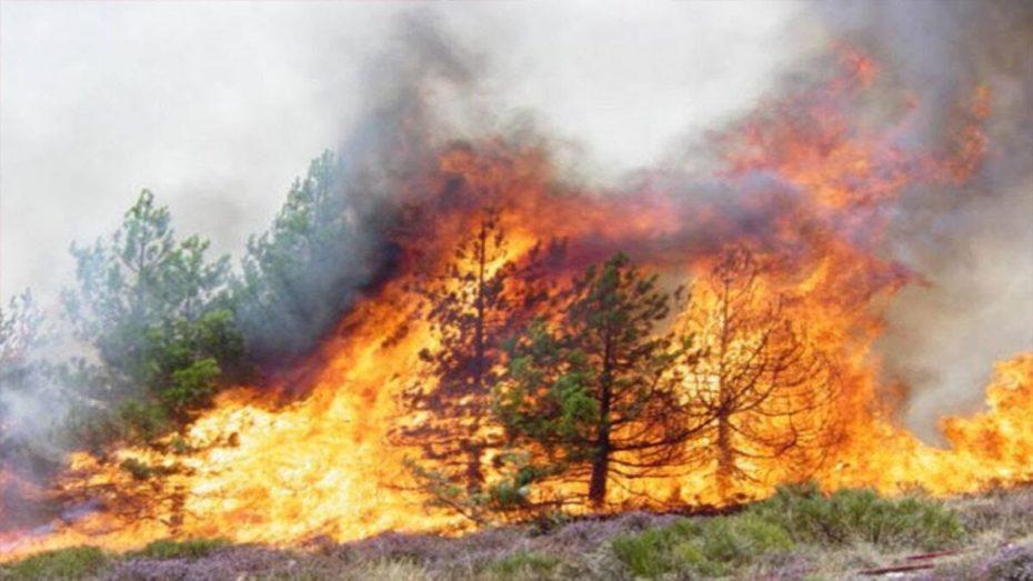 حرائق بسطيف تتلف نحو 6 هكتارات من الغطاء النباتي