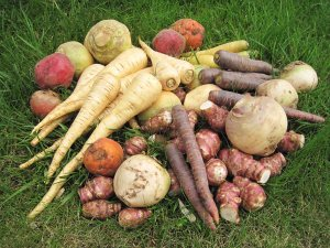 legumes-anciens-gamme
