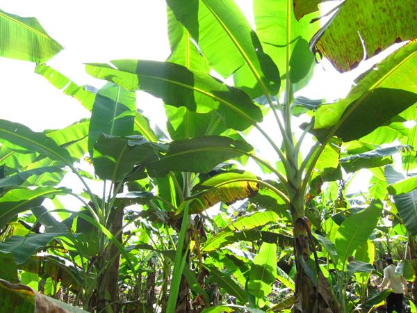 Amazonian Forest Garden -web1 Morgan Maher