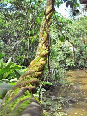 ayahuasca healing process