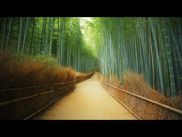 【海外】「日本は唯一無二だ!」日本の東京と京都の美しさに海外から驚嘆の声