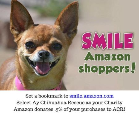 Amazon Smile Chihuahua