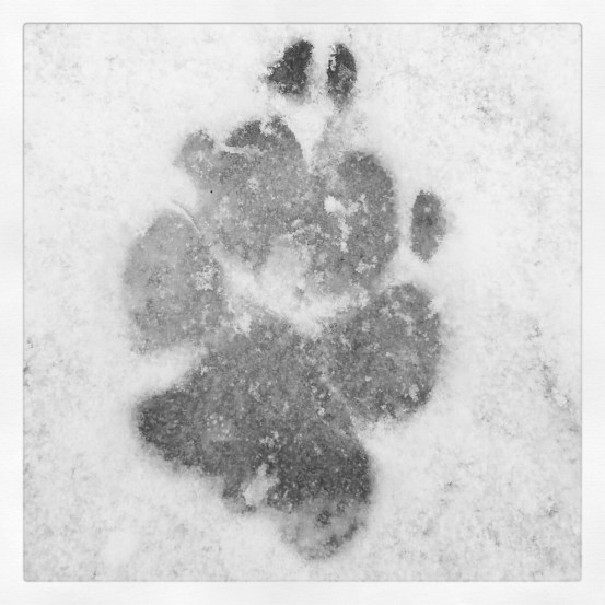 A dog's paw in the snow