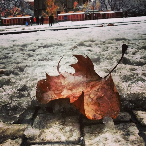 Leaf on snowy ground at Namesti Miru