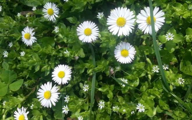RadkaZimova_Daisy_meadow