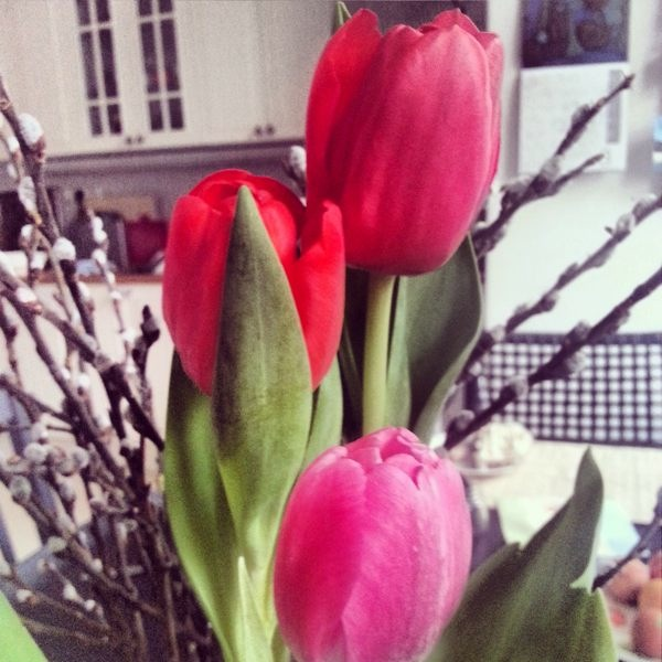 RadkaZimova_Easter_Red_Tulips