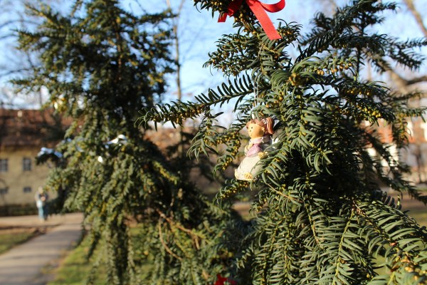 Kampa park, Tree decorated for Christmas