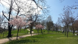 Sacre Coeur_park_trees_in_bloom