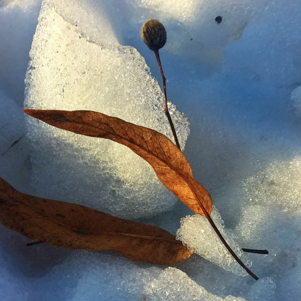 golden_leaf_on_white_and_blue_snow
