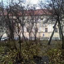 Prague-fall-photo-Charles-square-trees