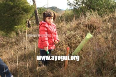 dia_del_arbol_2015-Galerias-Ayuntamiento-de-Ayegui (7)