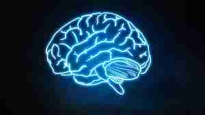 El cerebro automático y la memoria muscular