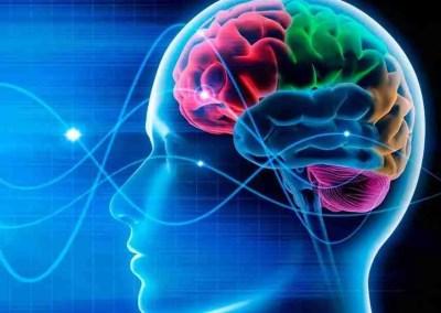 El cerebro motor
