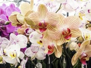 evde orkide bakımı nasıl olur
