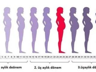 gebelik haftasına göre kaç aylık hamileyim