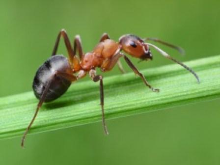 karınca-ilaclama