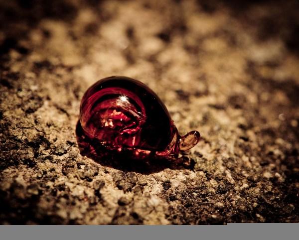 carnivorous snail or..