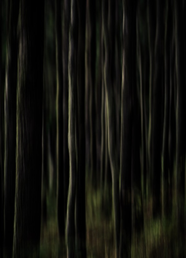 abstract forest