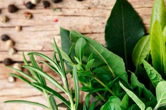 аюрведические растения