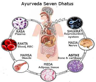 Pillole di ayurveda: i dhatu