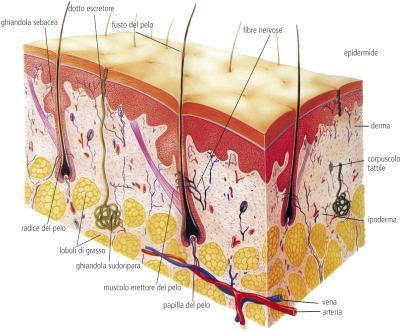 Pillole di ayurveda: la pelle, terza parte