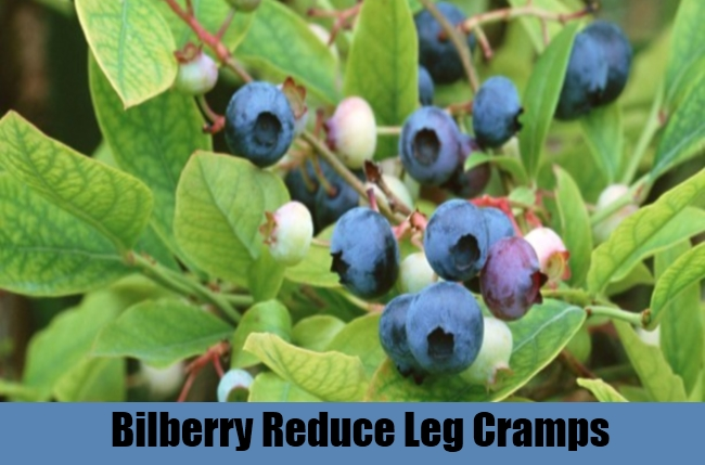 Bilberry Reduce Leg Cramps