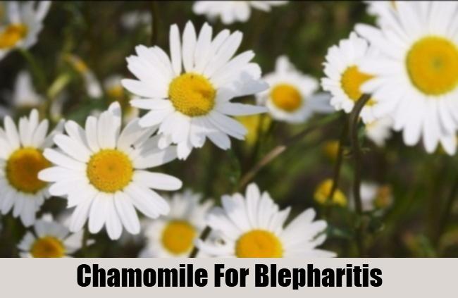 Chamomile For Blepharitis
