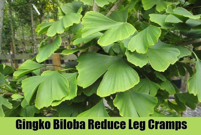 Gingko Biloba Reduce Leg Cramps