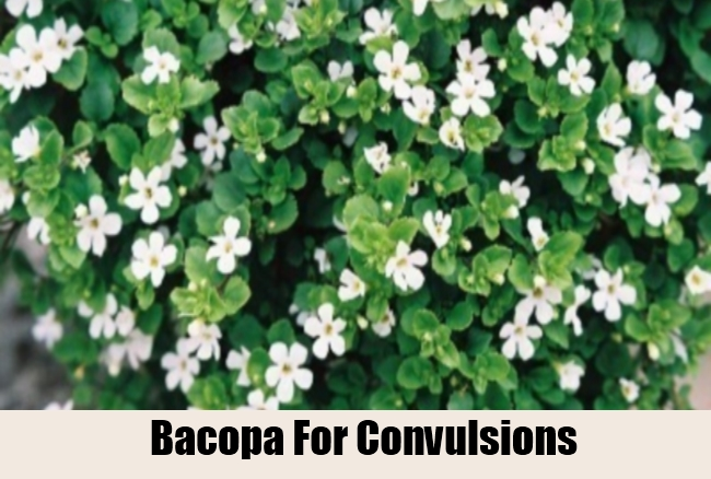 Bacopa For Convulsions