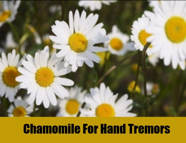 Chamomile For Hand Tremors