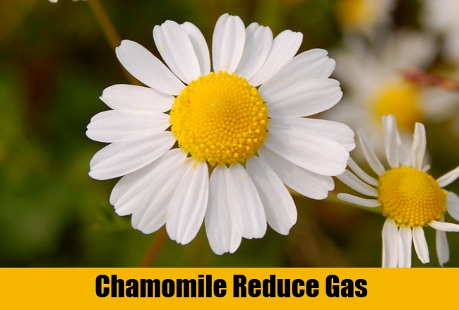Chamomile Reduce Gas
