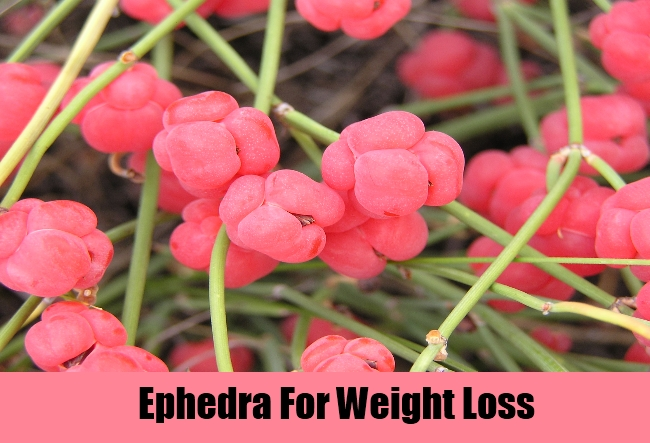 Ephedra For Weight Loss