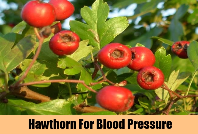 Hawthorn For Blood Pressure