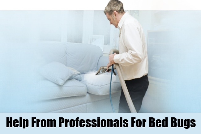 Help From Professionals For Bed Bugs