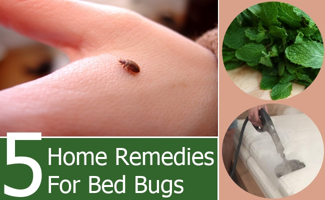 Household Bed Bug Remedies