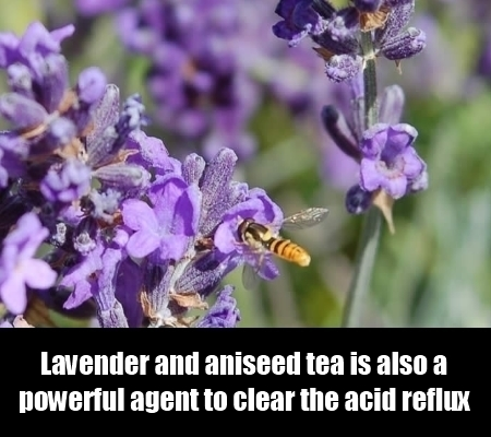 Lavender And Aniseed Tea