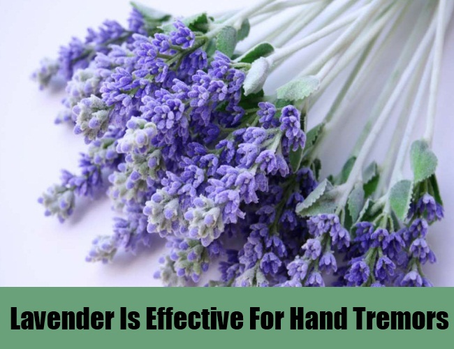 Lavender Is Effective For Hand Tremors