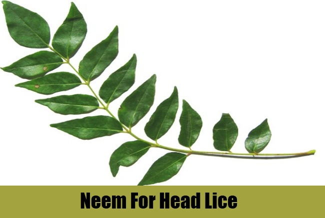 Neem For Head Lice