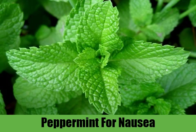 Peppermint For Nausea